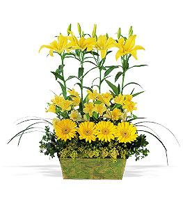 Yellow Garden Rows Floyd, VA Florist, Floyd Florists, Florists in Floyd VA, Floyd Florists - Floyd VA Flowers Delivery,